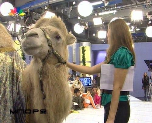 Η Άννα Δρούζα χαϊδεύει μια καμήλα