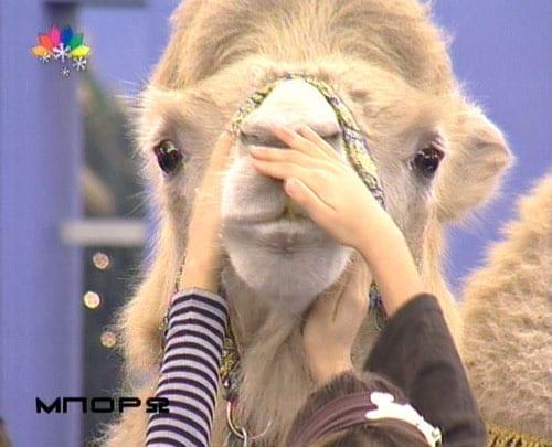 Εκπομπή - Τσίρκο με την Άννα Δρούζα