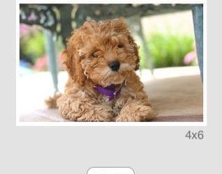 Epson iPrint iPhone App