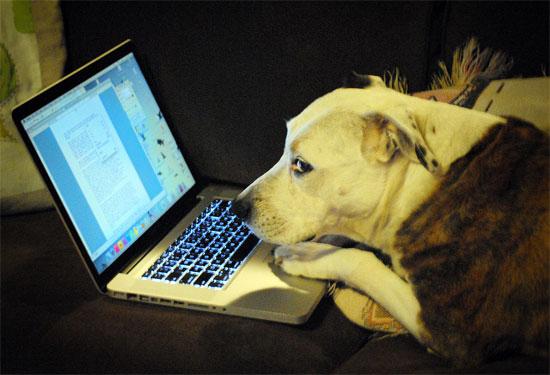 Πού θα βρείτε τις καλύτερες Προσφορές στο Internet