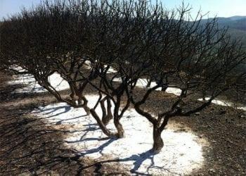Η Ελλάδα στις φλόγες. Για πόσα χρόνια ακόμα θα έχουμε πράσινο;
