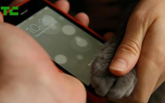 Γάτα ξεκλειδώνει το iPhone 5S με την πατούσα της