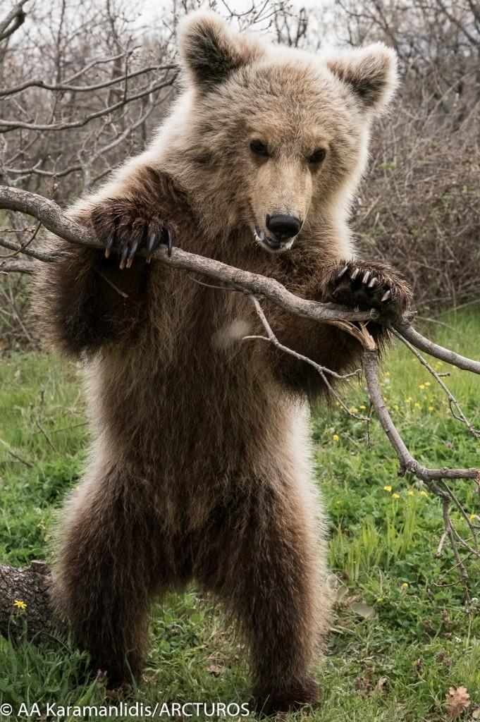Patrick bear
