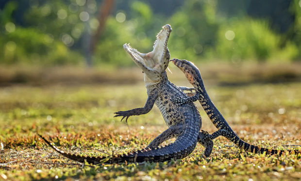 Hendy Lie, Indonesia, Nature & Wildlife, Open, 2016 Sony World Photography Awards