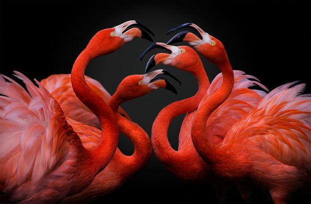 Pedro Jarque Krebs, Peru, Nature & Wildlife, Open, 2016 Sony World Photography Awards